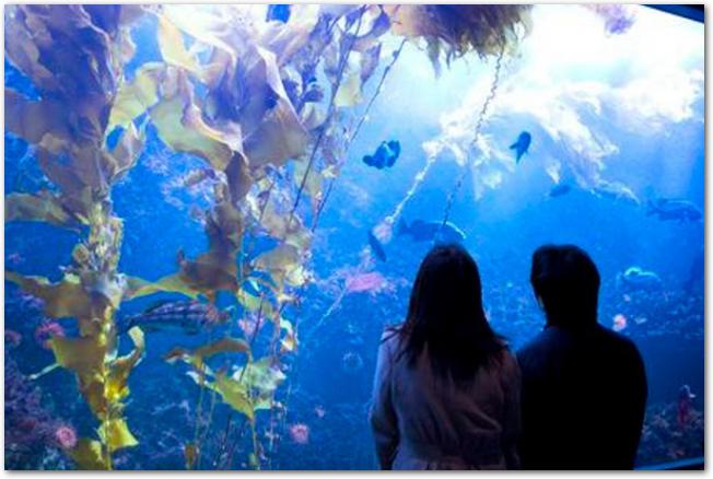 水族館の水槽の前にたたずむカップル